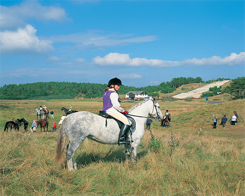 Pembrey Park Riding Centre